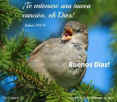 Los ojos del Señor están sobre los justos...Salmos 144:9