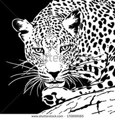 leopard  on a branch head in black and white colors - stock vector