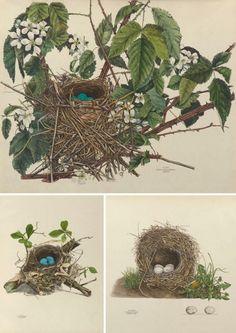 Over 25 Free Vintage Bird Printable Images | Remodelaholic.com