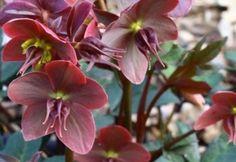 Ha eddig nem ismerted a hunyort, ezután imádni fogod Garden, Plants, Garten, Lawn And Garden, Gardens, Plant, Gardening, Outdoor, Yard