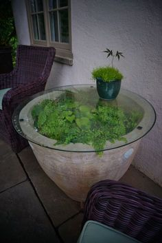 Terrarium pot with a glass top (garden art) | by http://KarlGercens.com GARDEN LECTURES