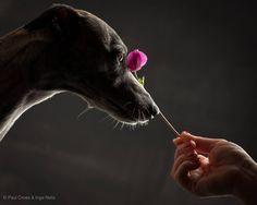Paul Croes Photography!