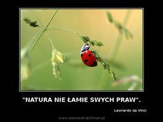 """"""" Natura nie łamie swych #praw """". Leonardo da Vinci"""
