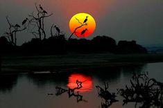 Sunset with Marabou Storks, Zambia