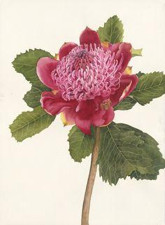 Flowers - Jane Blundell - Artist