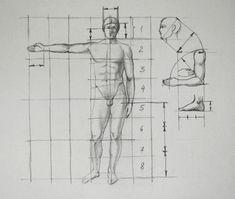 human proportion