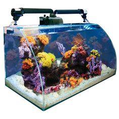 1000 images about nano marine aquariums on pinterest for Aquarium nano marin