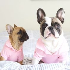 Pretty in Pink, French Bulldogs