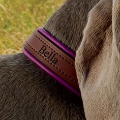 Padded Leather Dog Collars. Love this for Hermione.