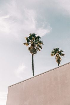 California dreamin' with palm trees and clear skies Beach Aesthetic, Summer Aesthetic, White Aesthetic, Aesthetic Photo, Aesthetic Pictures, Aesthetic Anime, Photo Wall Collage, Picture Wall, Magic Places