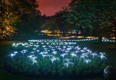 Arrow Spring at Longwood Gardens - Kennett Square, Pennsylvania    #lightatlongwood  By Bruce Munro