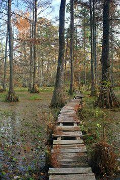 Swamp bridge..