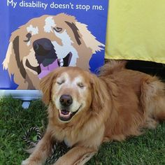 Duchess the therapy dog