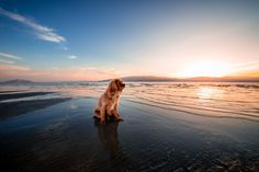 3840x2560 dog 4k best wallpapers for pc