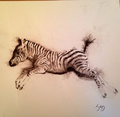 Zebra foal, pencil and wash on paper drawing.