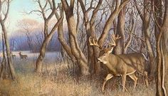 Staying in the woods Wildlife Paintings, Wildlife Art, Animal Paintings, Deer Paintings, Whitetail Deer Pictures, Whitetail Deer Hunting, Deer Pics, Hunting Art, Bow Hunting