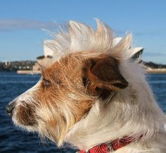 His hair is the Sydney opera house!!