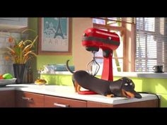 #Doxie people you will LOVE this video. A Must watch for all #Dachshund Lovers!!!