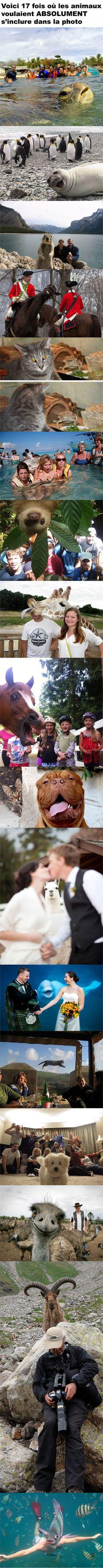 17 fois où les animaux voulaient absolument s'inclure dans la photo
