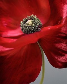 """""""They shall grow not old as we that are left grow old: Age shall not weary them nor the years condemn. At the going down of the sun and in the morning We will remember them. Lest we forget."""" Laurence Binyon For the Fallen"""