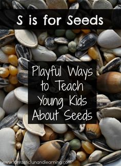 S is for ways to teach young kids about seeds. Great ideas for presch… S is for ways to teach young kids about seeds. Great ideas for preschool seed theme Kindergarten Science, Science Classroom, Teaching Science, Science For Kids, Classroom Ideas, Teaching Kids, Science Ideas, Outdoor Classroom, Creative Teaching