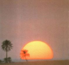 palms and sunsets. retro vintage instant photo sun sunset palms beach sunny pastel old oldsoul oldvibes vibes oldie goodie gold goldie moment Orange Aesthetic, Aesthetic Vintage, Aesthetic Photo, Aesthetic Pictures, 1970s Aesthetic, Sun Aesthetic, Simple Aesthetic, Aesthetic Songs, Aesthetic Food