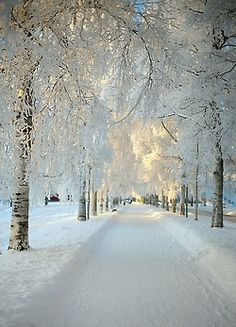 Whimsical White Wintry Road Accompanied With Snow Covered Winter Trees!