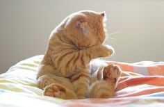 kitty hq 251 Daily Awww: Cats are way too adorbs HQ photos) I Love Cats, Cute Cats, Funny Cats, Baby Animals, Funny Animals, Cute Animals, Crazy Cat Lady, Crazy Cats, Kittens Cutest