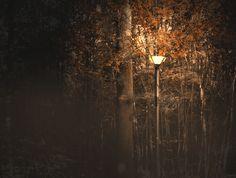Autumn light by Benjamin Baschet on 500px