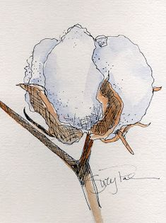 Suzy 'Pal' Powell Watercolors Collages and Sketches Pen And Watercolor, Watercolor Flowers, Watercolor Paintings, Art Sketches, Art Drawings, Cotton Painting, Cotton Plant, Nature Sketch, Plant Drawing