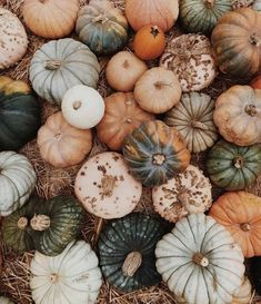 Colourful little mini pumpkins in all their glory. Have you got your Halloween decorations yet? - With the arrival of rains and falling temperatures autumn is a perfect opportunity to make new plantations Samhain, Mabon, Over The Garden Wall, Autumn Aesthetic, Boho Aesthetic, Aesthetic Clothes, Mini Pumpkins, Fall Pumpkins, Fall Wallpaper