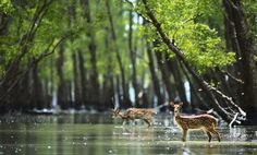 Sundarbans National Park : sundarbansnationalpark.com provide you complete information about sundarbans national park. for more information visit on our website: http://www.sundarbansnationalpark.com/   gtitourismindia