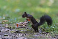 Shopping day by Guido Wacker on 500px