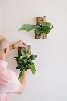 The Fresh Exchange: Mounting a Staghorn Fern with @Clyde Oak