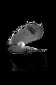 #Black&White Photography|Pearl and Oyster