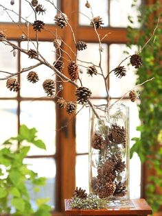 diy pinecone branch.....pretty at any time of the year!