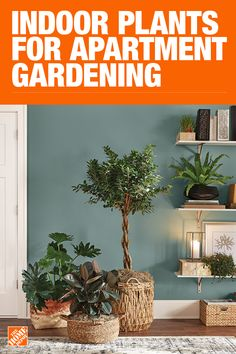 House Plants - Indoor Plants - The Home Depot House Plants Decor, Plant Decor, Indoor Garden, Home And Garden, Garden Club, Outdoor Plants, Plants Indoor, Potted Plants, Garden Plants