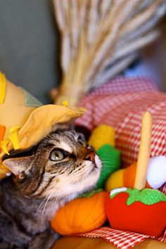 Autumn Harvest Festival Catnip Toys and Scarecrow Cat Costume by MissStitchinWitch via Etsy