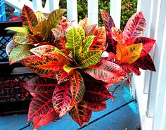 5 plantas de interior que no necesitan mucha luz. Ficus, Foliage Plants, Potted Plants, Kalanchoe Blossfeldiana, Philadelphia Flower Show, Green Life, Back Gardens, Outdoor Plants, Tropical Garden
