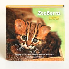 ZooBorns Cats!: The Newest, Cutest Kittens and Cubs from the World's Zoos      by     Andrew Bleiman,     Chris Eastland $8.30