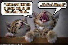 Image result for funny cat images with words