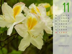November - Kalender 2016 - Blumen