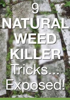 Gardening Expert Walter Reeves on 9 Popular Natural Weed Killers - so great to get the truth from someone who really knows.