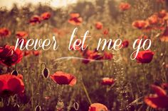 Never let me go   flowers photography warm red by BasicDesign, $29.00