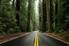 États-Unis: «l'Avenue des Géants», la route californienne à faire absolument