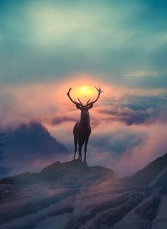 majestic animals animal portraits beautiful sunset amazing sunsets colorful sunset animals beautiful 20 cool photography ideas of this year Amazing Sunsets, Beautiful Sunset, Amazing Nature, Beautiful World, Beautiful Places, Amazing Art, Amazing Pics, Beautiful Gifts, Wonderful Places