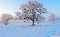 Pastel / Winter / Morning / Beauty
