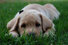 dog/puppy pose, tall grass