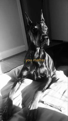 Black Doberman, Doberman Love, Cute Wallpaper Backgrounds, Cute Wallpapers, Cute Funny Animals, Cute Dogs, Scary Dogs, Creepy Pictures, Black Aesthetic Wallpaper