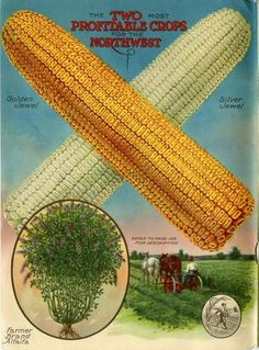 """Color images didn't often appear inside seed catalogs, but this one did in the 1921 Farmer Seed & Nursery catalog.  Just inside the front cover, this beautiful image of the firm's Golden Jewel/Silver Jewel corn and Farmer Brand Alfalfa are heralded as """"The two most profitable crops for the Northwest.""""  Farmer Seed & Nursery originated in Faribault, MN in 1888; Andersen Horticultural Library hosts a collection of their vintage catalogs."""